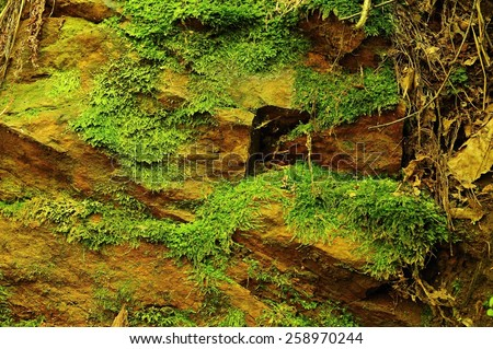 Rough stone texture with green moss after a spring rain - stock photo