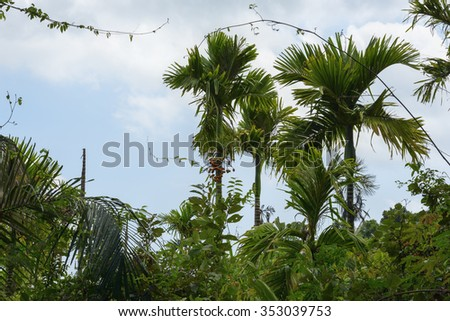 rough thickets and palm trees in rainforest