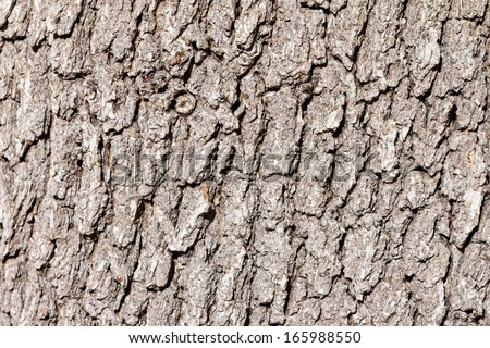 Rough wood tree bark texture background - stock photo