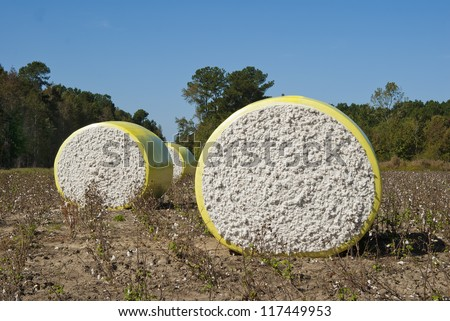 Round bales of freshly harvested cotton wrapped in plastic and waiting in the field.