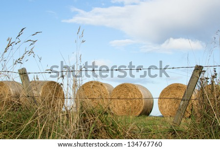 Round bales of hay, newly harvested, behind a barbed wire fence - stock photo