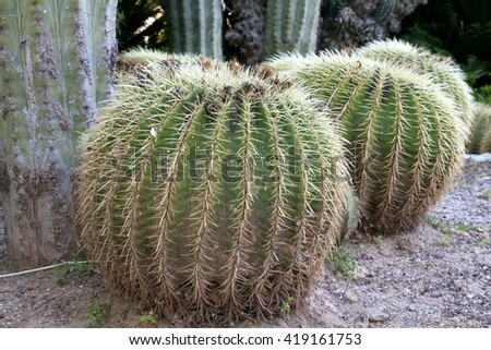 round cactaceae with spikes