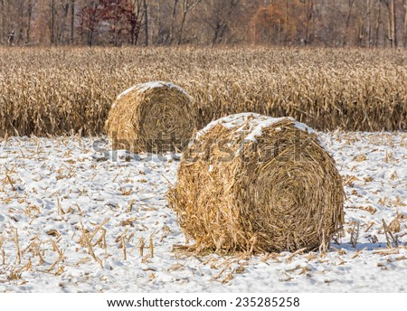 Round crop bales on the edge of a corn field are topped with a light snow fall in late autumn. - stock photo