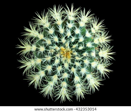 Round green cactus isolated on black background - stock photo