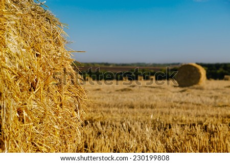Round hay bales in a newly mowed agricultural field under a clear blue sunny sky, close up on one bale in the foreground - stock photo