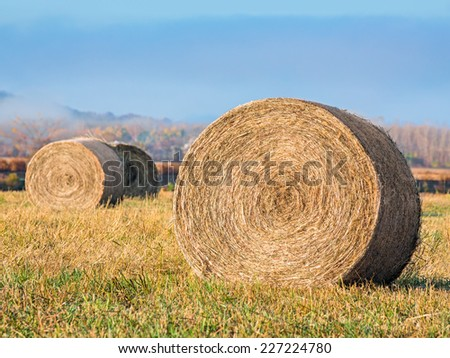 Round hay bales rest in field on a misty autumn morning in mid-America. - stock photo