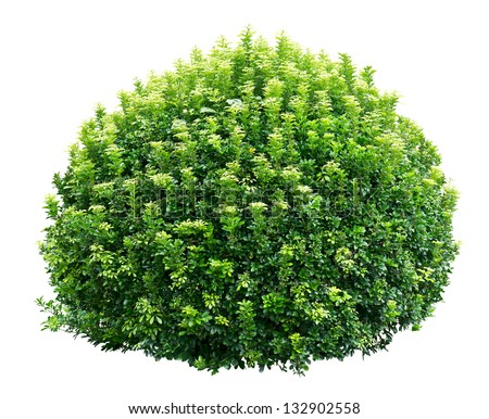 Shrub Stock Images Royalty Free Images Amp Vectors