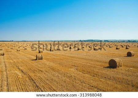 Round straw bales in harvested fields and blue sky  - stock photo