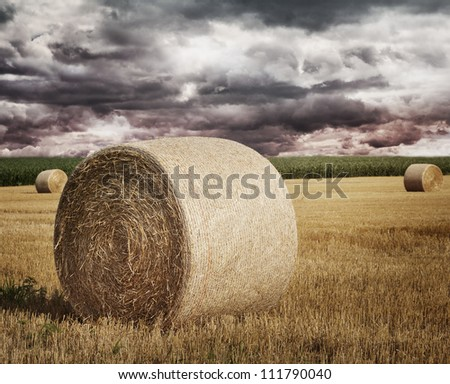 Round Straw Bales On A Field - stock photo