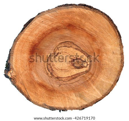 Round wooden cut with annual rings isolated on white background