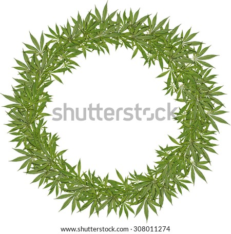 Round wreath of green leaves cannabis - stock photo