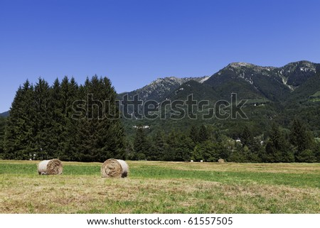 Rounded hay bales on a field with mountain and trees in the background, clear blue sky for copy space