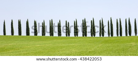 row from cypress trees in Tuscany in Italy