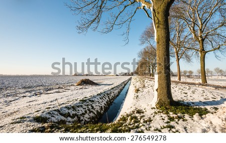 Row of bare trees next to a country road in agricultural area covered with a layer of snow. - stock photo