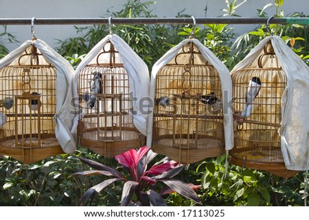 Row of cages with birds for sale - stock photo