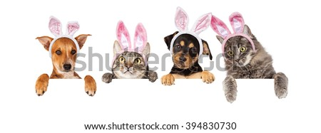 Row of cats and dogs wearing Easter Bunny ears, hanging their paws over a white banner. Image sized to fit a popular social media timeline photo placeholder - stock photo