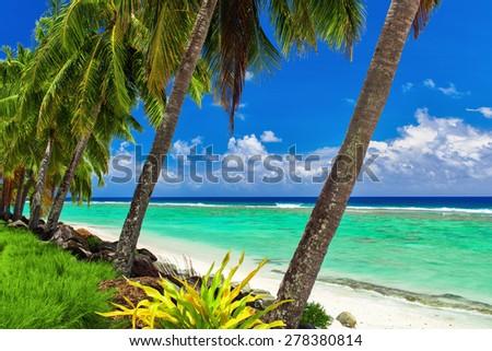Row of coconut palm trees over the tropical beach of Rarotonga, Cook Islands - stock photo