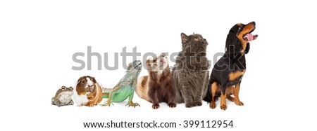 Row of common domestic pets lined up in a row looking up in the same side direction. Horizontal website banner.