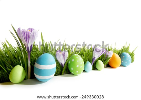 Row of Easter Eggs in fresh green grass with crocus flowers isolated on white background - stock photo