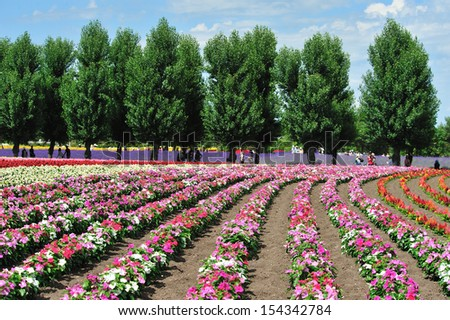 Row of flower and pine in garden, north of Japan - stock photo
