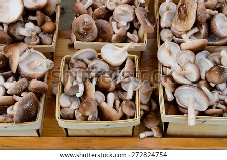 Row of mushroom boxes at Fruits and Vegetables stall in University District farmer market (aka U-district) in Seattle, WA, USA - stock photo