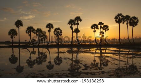Row of palm trees in silhouette reflect on surface water of river at sunrise in the ChauDoc town, An Giang, Vietnam. Chaudoc city near Cambodia is famous tourist spots of the Mekong river tours. - stock photo