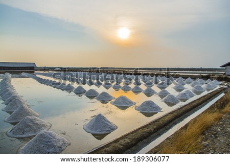 Row of Salt pile in Salt pan with sunset scene