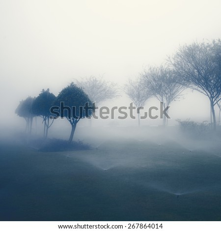 Row of small trees  in perspective in beautiful, misty weather. An abstract nature background. - stock photo