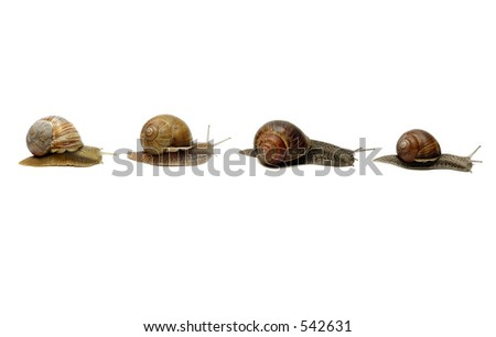 Row of snails, isolated