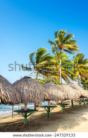 Row of tables and palm trees on a beach in Covenas, Colombia