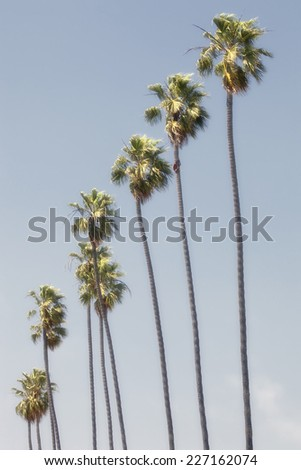 Row of tall palm trees isolated against a blue sky. - stock photo