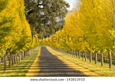 Row of Trees - stock photo