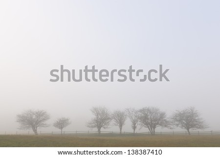 Row of trees during early morning fog, Stowe Vermont, USA - stock photo