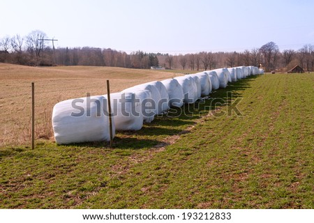 Row of white hay bales