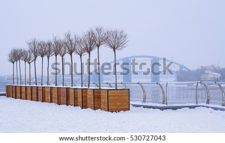 Row of young trees wintering in wooden flower pots at Poshtova Square in Kiev, Ukraine. Podilsko-Voskresensky bridge is on the background.