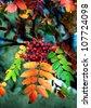 Rowan berries on rowan tree with colorful autumn leaves - stock photo