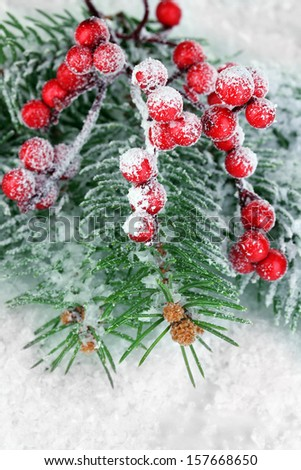 Rowan berries with spruce covered with snow  - stock photo