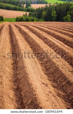 Rows and furrows in a newly planted potato field on Prince Edward Island.  Shallow depth of field. - stock photo