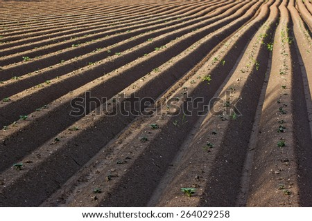 Rows in plowed potato field - stock photo