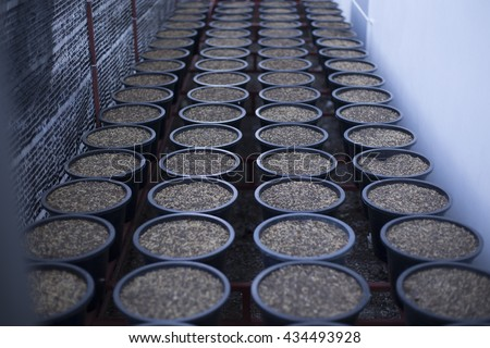 rows of black plastic pots for seeding,preparing for cultivation, agriculture business, plant growing, farming, crop, potting , vermicompost - stock photo