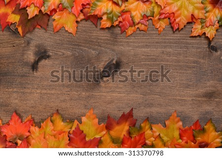 rows of fall colored maple leaves - stock photo