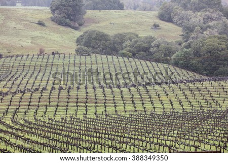 Rows of grape vines grow on the green hills of a northern California vineyard. This region, which includes Napa, Sonoma, and Mendocino, is famous for its grapes and associated wineries. - stock photo