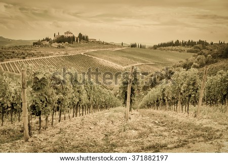 Rows of grapes in a vineyard - the stylized old photograph