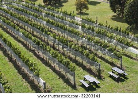 Rows of grapevines on vineyard in New Zealand - stock photo