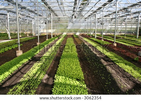 Rows of seedlings in a greenhouse.