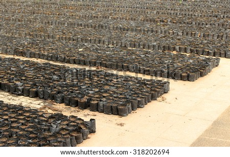 rows of soil in black bags for seeding