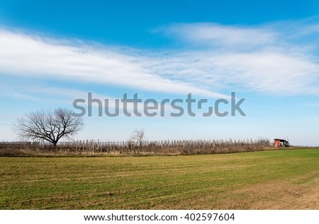 Rows of vineyard with bloue sky in springtime - stock photo