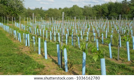 how to grow grape vines ontario