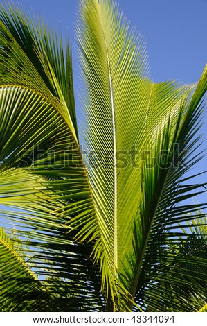 Royal Palm Green Leaves