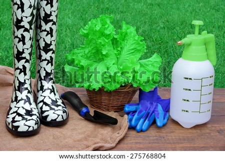 Rubber Boots, Watering Can, Spade, Gloves And Basket With Green Salad Plant On Rough Wood Desk. Garden Grass On The Background. Gardening Concept